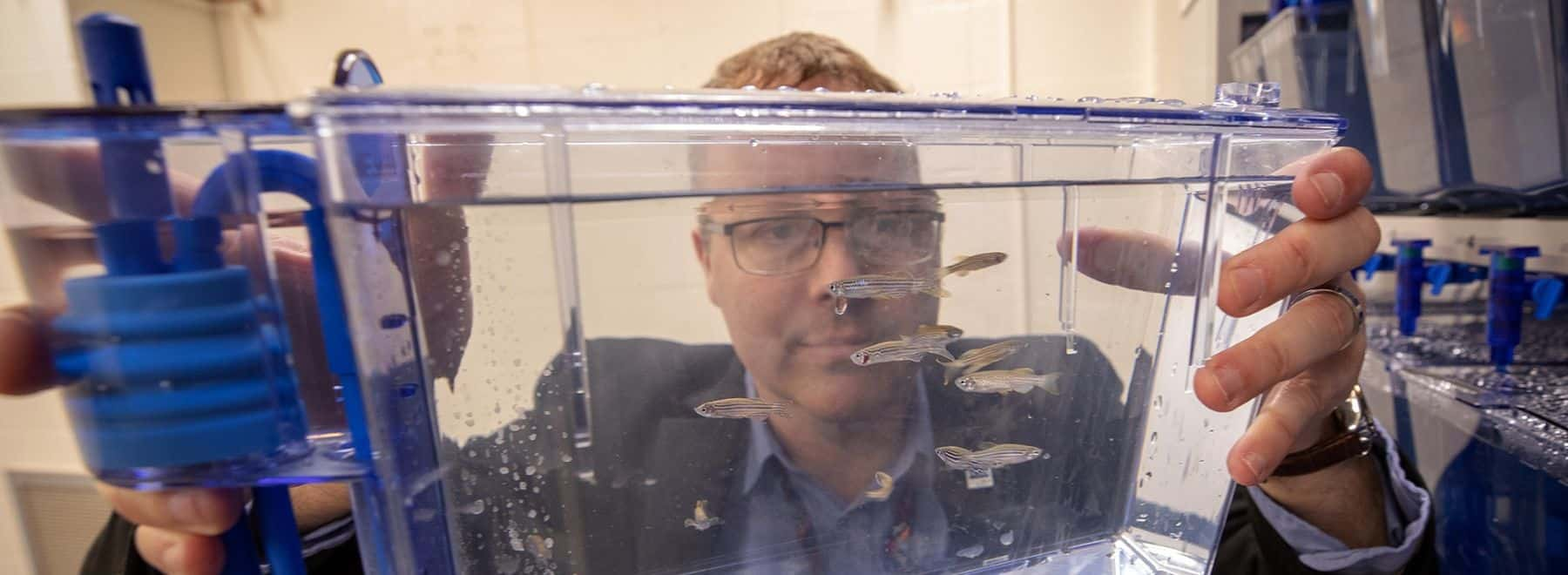 Male researcher examines fish experiment