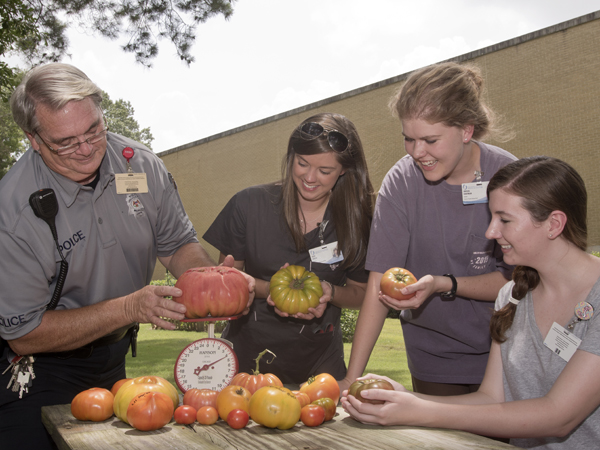 Blanton weighs the biggest tomato weighing in close to 4 lbs, while OT students Allie House, Abigail Hartman and Jennifer McNair compare with Blanton's other tomatoes.