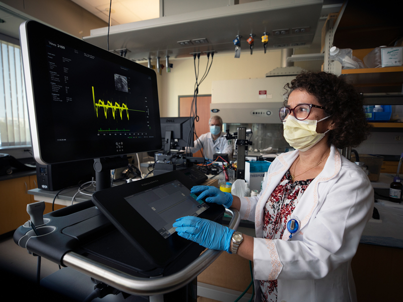 Dr. Jussara do Carmo, UMMC associate professor of physiology and biophysics, studies how parental health influences the health of their offspring. Her research, supported by the NIH, is one of hundreds of UMMC projects funded by outside grants in the past year.